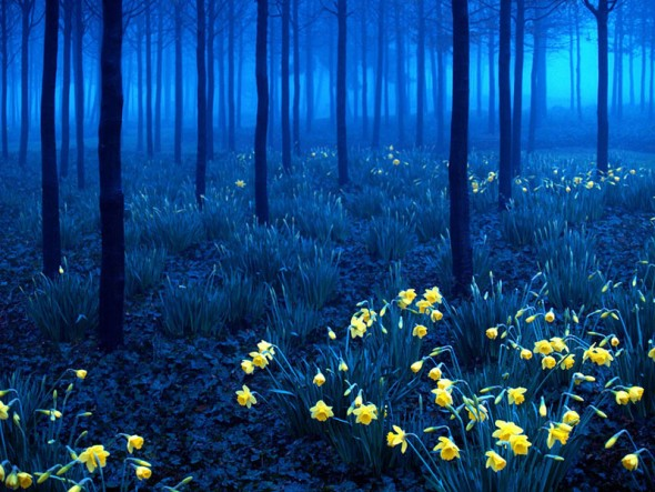 Black Forest – Germany