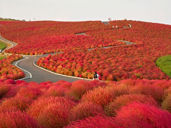 Hitachi Seaside Park – Japan