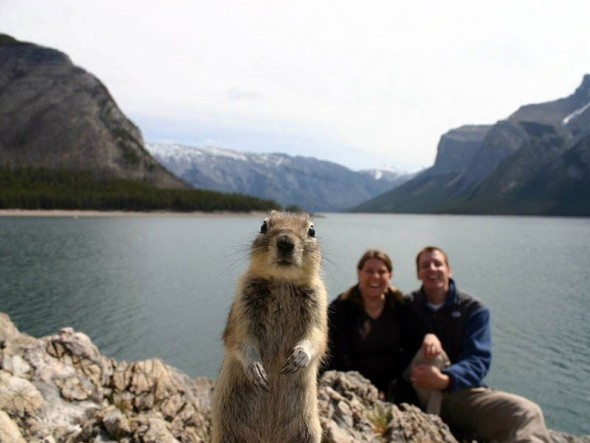 squirrel-photobomb-resizecrop--