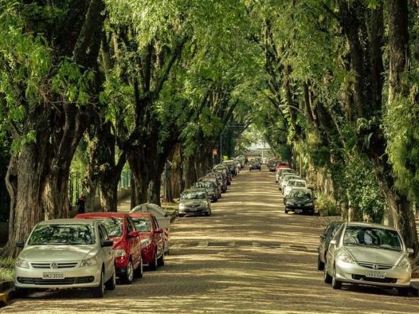 tree-street4