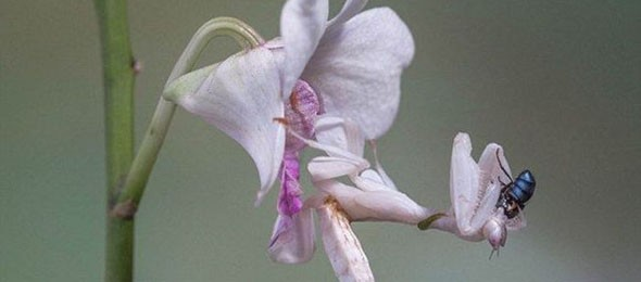 not_your_ordinary_orchid_640_01