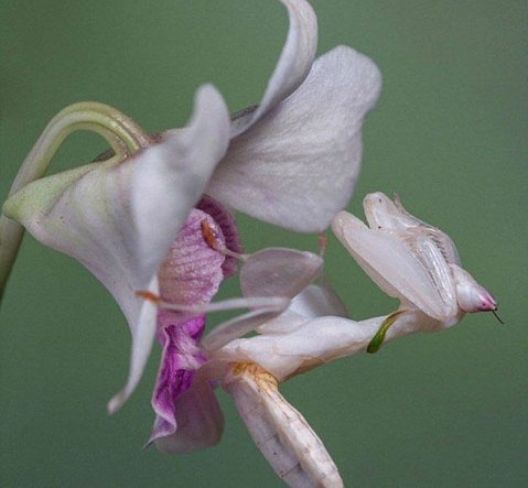 not_your_ordinary_orchid_640_high_02