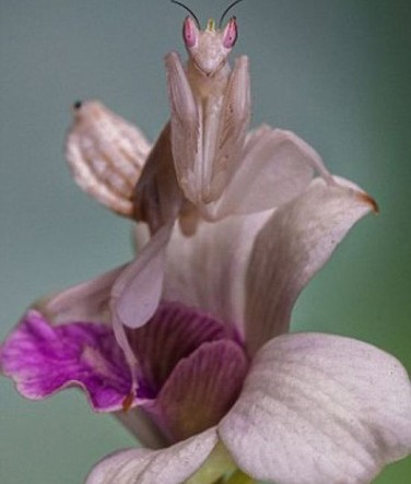 not_your_ordinary_orchid_640_high_03