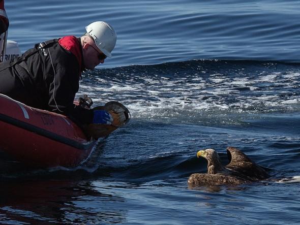 drowning_eagle_saved_03