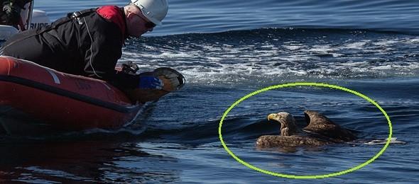 drowning_eagle_saved_039