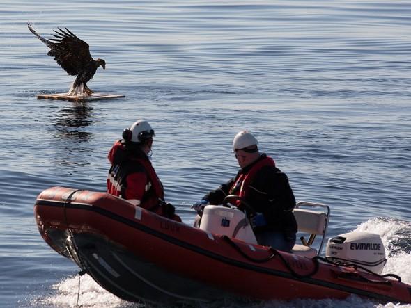 drowning_eagle_saved_05