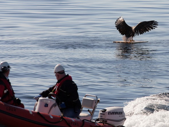 drowning_eagle_saved_06