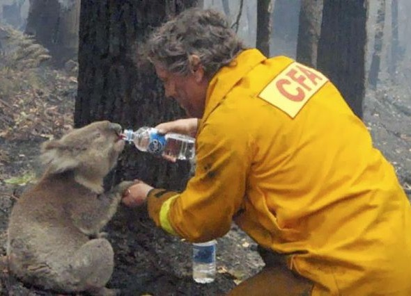 human_beings_doing_extraordinary_things_5Dh4B_640_25 koala
