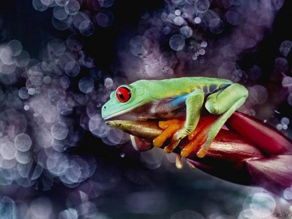 macro-frogs-wil-mijer-14