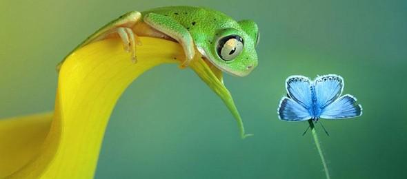 macro-frogs-wil-mijer-48