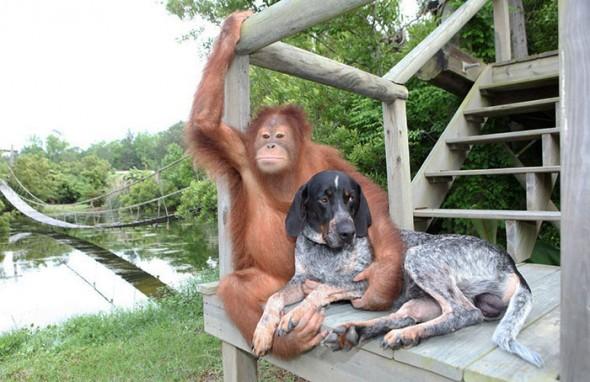 #14 Suryia the Orangutan and Roscoe the Blue Tick Hound