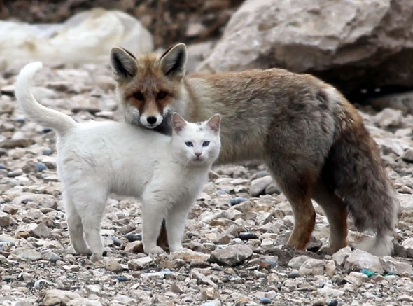 #2 Cat And A Fox