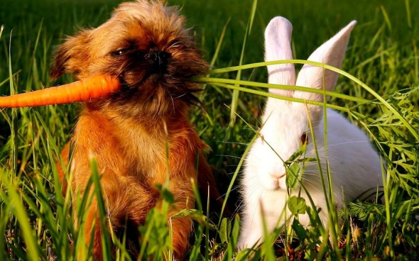 #22 Puppy And Rabbit