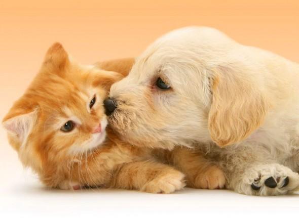 #27 Kitten And Puppy
