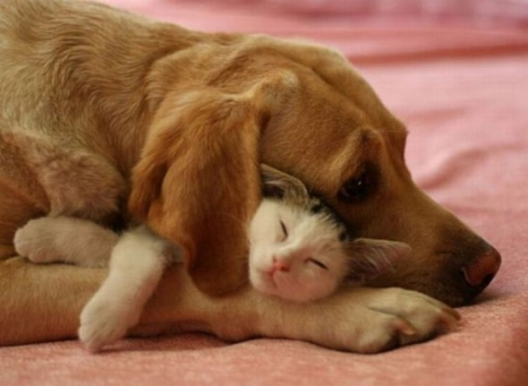 #28 Dog And Cat
