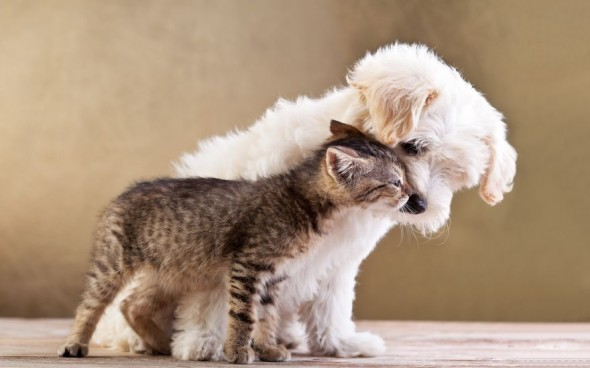#34 Kitty And Puppy