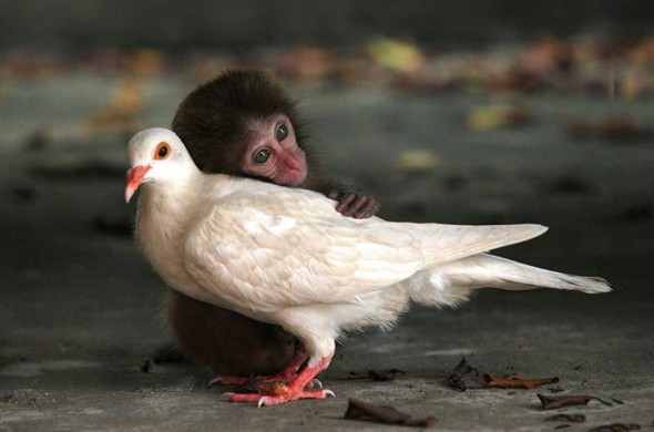 #7 Monkey And Pigeon