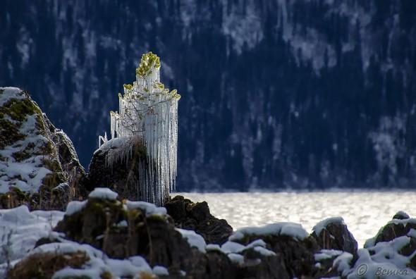 #10 Frozen Tree