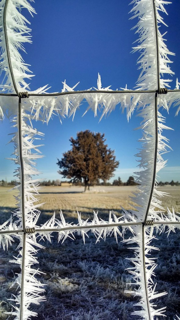 #11 Frost On The Fence