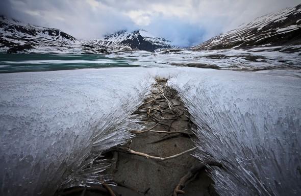 #16 Frozen Grass