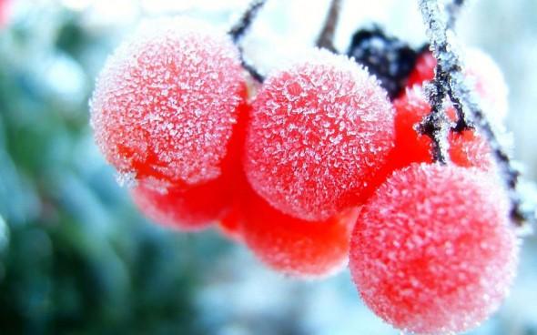 #27 Frozen Fruits