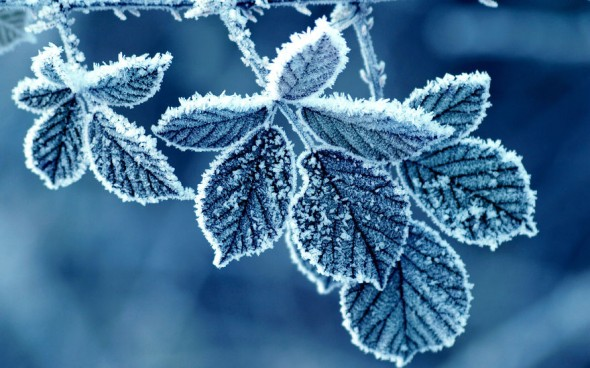 #28 Frozen Leaves