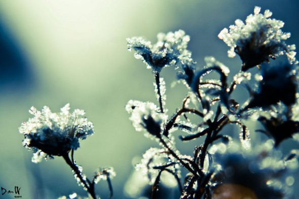 #33 Frozen Flowers