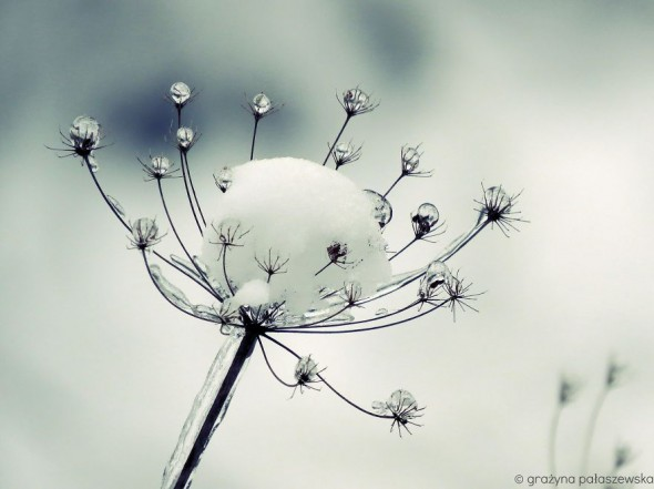 #44 Frozen Meadow