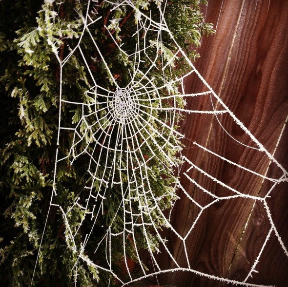#71 Frozen Cobweb