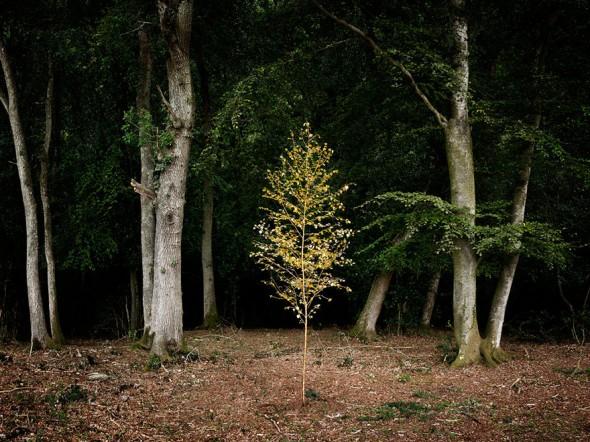 surreal-forest-photograhy-ellie-davis-17__880