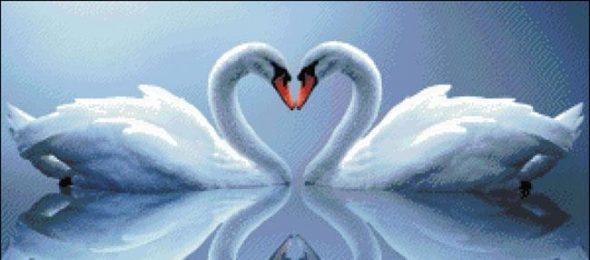 labudovi-ljubav-partner-dobro-je-znati-radio-pingvin